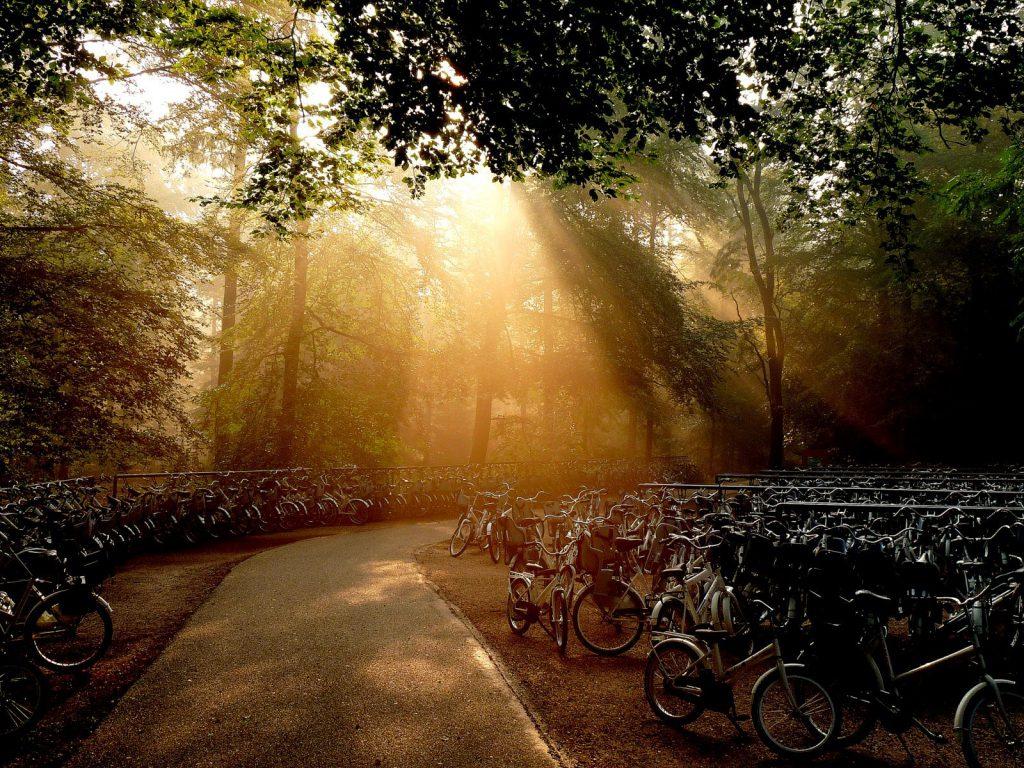 Witte fietsen op Nationaal Park De Hoge Veluwe