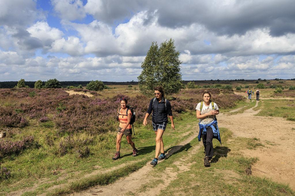 Lang of korte wandelingen op de Veluwe